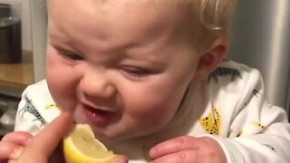 Baby tries lemon for the first time and totally wants more