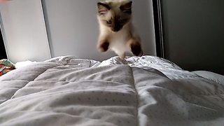 Kitten is the cutest alarm clock ever!  - Video