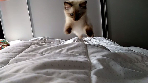 Kitten is the cutest alarm clock ever!