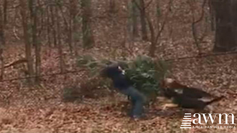 Man Goes To Throw Away Christmas Tree. Doesn't Realize Dog Is Following Him, Ends In Hilarity