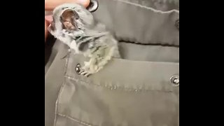 4-Month Old Bush Baby Emerges From Jacket Pocket - Video