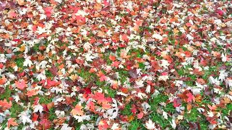 Why You Should Not Rake Those Fall Leaves