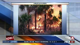 Wildfire Watch: A look at brush fires across Southwest Florida - Video