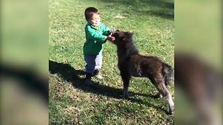 An Unusual Friendship Between A Toddler Boy And A Baby Donkey