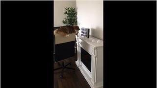 Cat shamelessly knocks over light bulbs, feels no remorse - Video