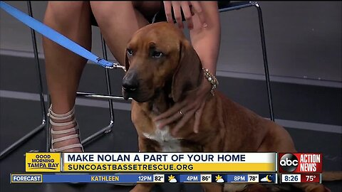 "Rescues in Action April 14 | Nolan needs ""fur""-ever home"