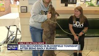 Detroit Dog Rescue looking for owner of dog with badly burned back - Video