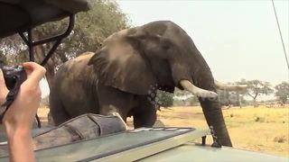 Inquisitive elephant joins tourists on safari for a tea-time break - Video