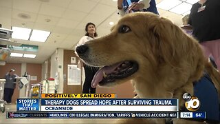 Therapy dogs bring comfort after surviving their own traumas