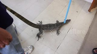Monitor lizard drops through ceiling onto workers' desk
