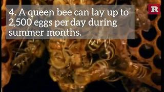 7 facts about bees | Rare News - Video