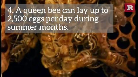 7 facts about bees | Rare News