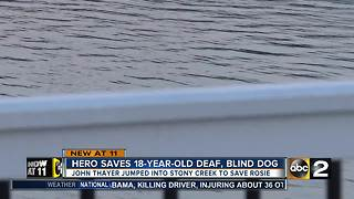 Hero saves 18-year-old deaf, blind dog - Video