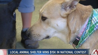 Wayside Waifs wins $15,000 in national contest