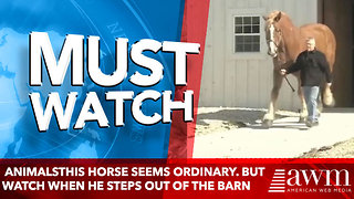 AnimalsThis Horse Seems Ordinary. But Wait Until He Steps Out Of The Barn - Video