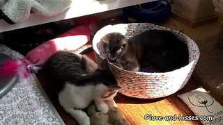 Pair of Cats Fight Over Who Gets to Lie in the Sun - Video