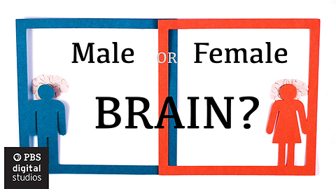 This Test Show Us Whether We Have A Male Or A Female Brain
