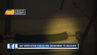 Aggressive bat colony invades Pasco fire station, forces firefighters out - Video