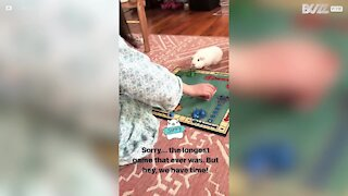 Girl plays board game with her Guinea pig