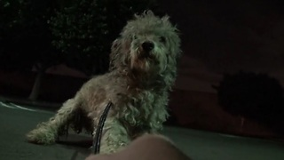 Hope For Paws saves Oakley the dog in a late night rescue mission - Video