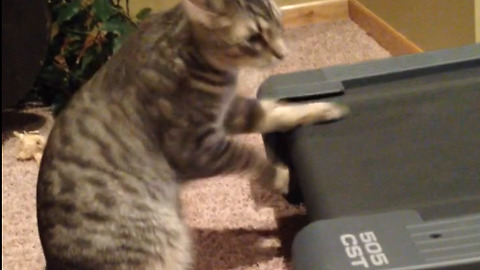 A Cat Rides On A Treadmill With Front Paws Only