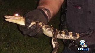 Port St. Lucie Police Officer Responds to Call of Gator at Walmart