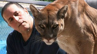Cougar Man: Living With A Mountain Lion - Video