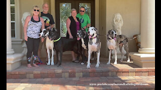 How To Take A Group Photo of Five Great Danes And Four Dog Lovers