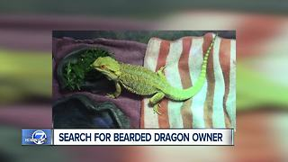 Top stories: Leadville wildfire, murder suspect, pet dragon - Video