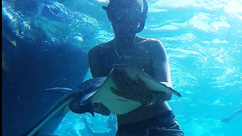 Friendly stingray swims into man's arms