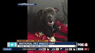 Taking the best pictures of your pet on National Pet Photo Day - Video