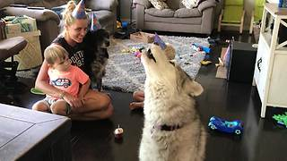 Husky joins family in singing happy birthday to doggy friend - Video