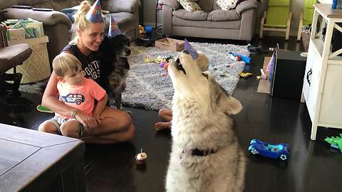Husky joins family in singing happy birthday to doggy friend