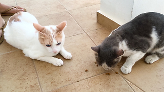 Cat Sharing His Food With A Stray Cat  - Video