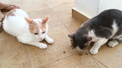 Cat Sharing His Food With A Stray Cat