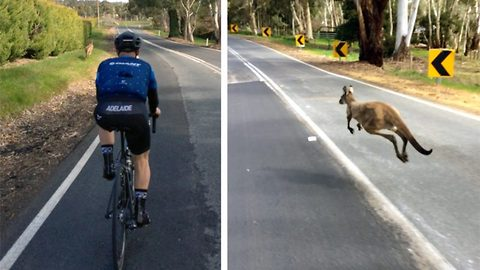 Tour de Prance: Adventurous kangaroo joins group of cyclists on road trip