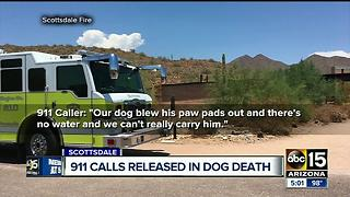 Dog collapses on trail during summer heat - Video