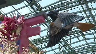 New spring display unveiled at Bellagio Las Vegas - Video