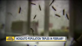 Mosquito population triples in February due to record high temps - Video
