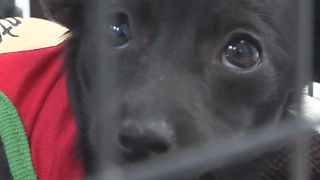 Kennel heaters break at West Valley Humane Society - Video