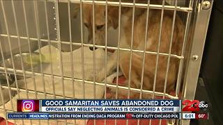 Good samaritan saves abandoned dog - Video
