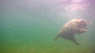 Amazing footage shows bear catching fish underwater
