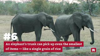 Learning more about Elephants | Rare Animals - Video
