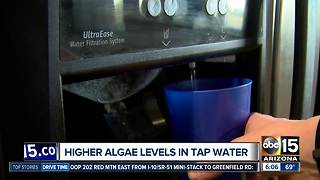 Tempe residents complain of smelly water; officials say algae is to blame - Video