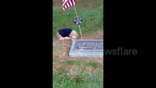 Faithful Dog Refuses To Leave Owner's Grave - Video