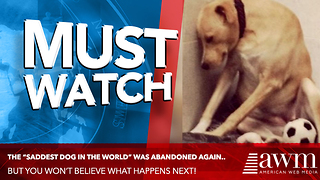 """Pup Being Called """"Saddest In The World"""" Desperately Needs Your Help. Here's His Story - Video"""