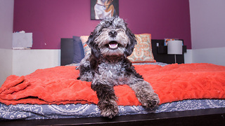 Check Out What The Inside Of New York's Luxury Dog Hotel Looks Like - Video