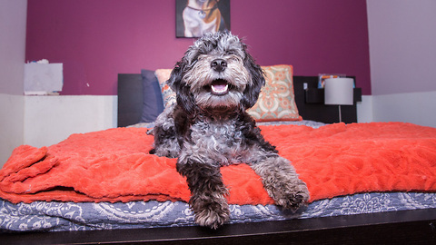 Check Out What The Inside Of New York's Luxury Dog Hotel Looks Like