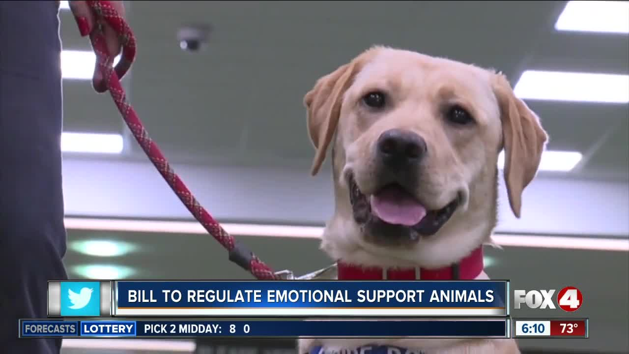 New bill would crack down on misuse of emotional support animal designations