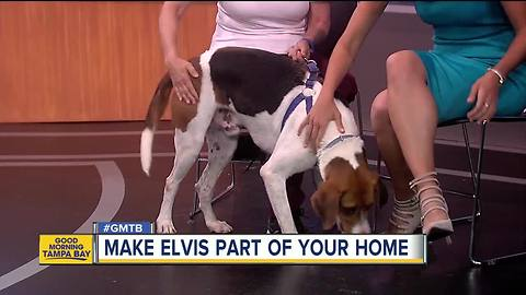 Rescues in Action: Elvis